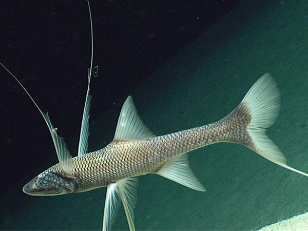 syvänmeren kalat