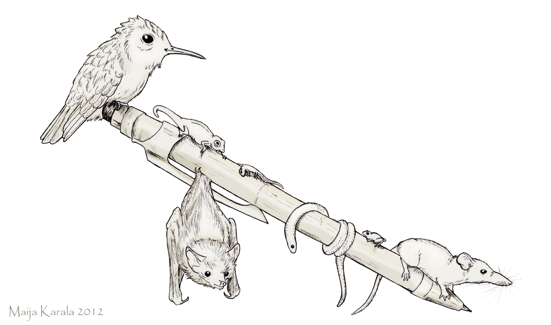 Galilei Koira
