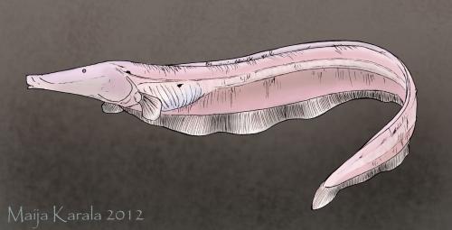 orthosternarhus tamandua maija karala knifefish veitsikala
