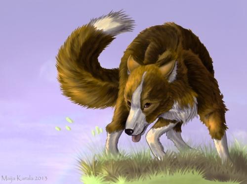 fuegian dog pseudalopex culpaeus patagonian fox zorro culpeo andean maija karala