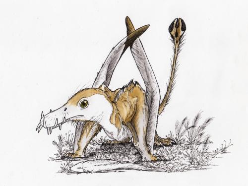 dorygnathus2