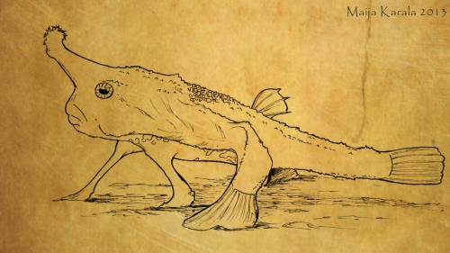 ogcocephalus nasutus väri