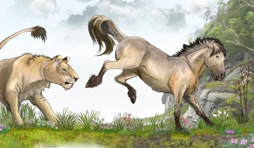 tarpaani villihevonen equus ferus maija karala