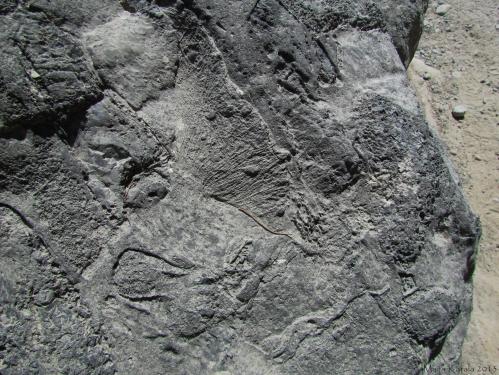 kreeta_geologia_murikka_crete_samaria_gorge_geology