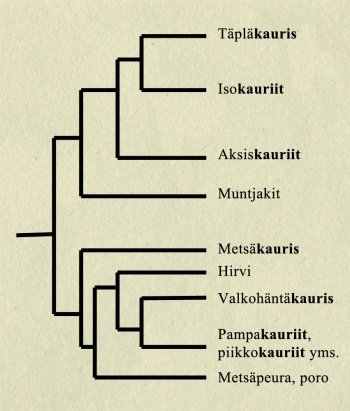 cervidae