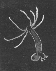 Hydra-Foto