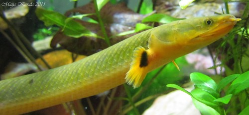 käärmekala planeetanihmeet
