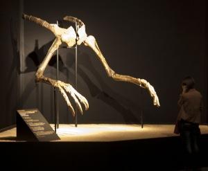 Deinocheirus_hands