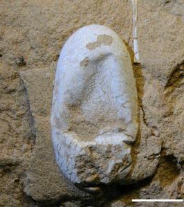 image_1973_3-Hamipterus-tianshanensis