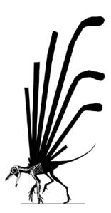 Longisquama_insignis_skeleton&silhouette_small