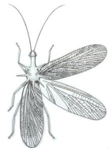 Titanoptera