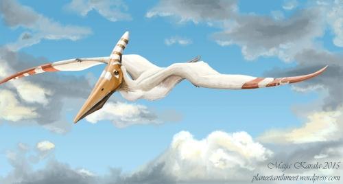 pteranodon_longiceps_maija_karala_pieni