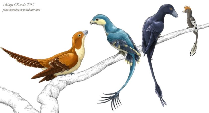 siivekkäät_dinosaurukset_jeholornis_sapeornis_microraptor_anchiornis_maija_karala