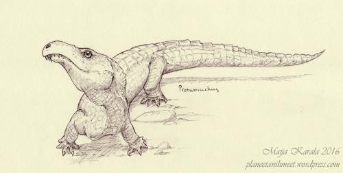 proterosuchus_pienempi
