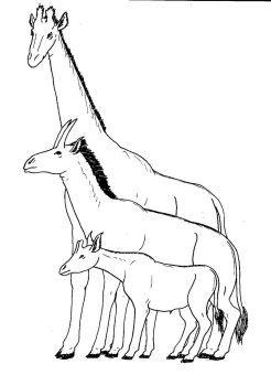 giraffidcomparison