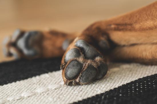 paws-1636271_1280