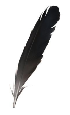 archaeopteryx_sinkkonen