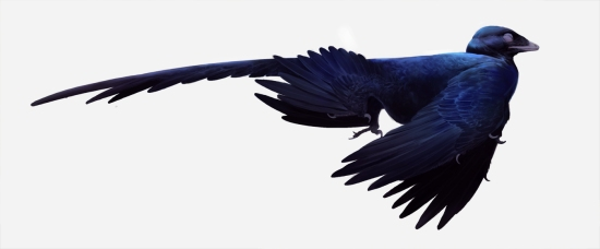 microraptor_color_sinkkonen