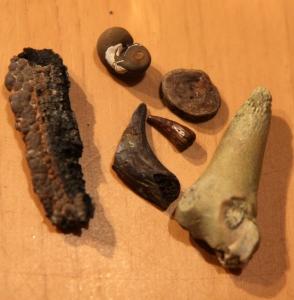 blogi_yarnmouth_fossiileja