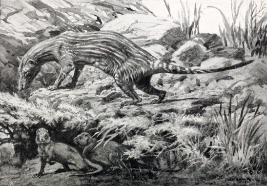 Prothylacinus