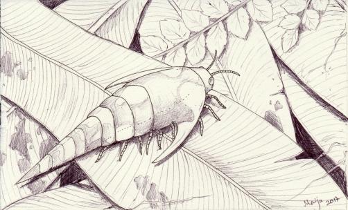 antarcticarcinus