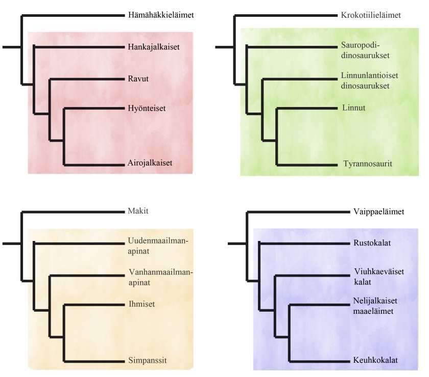 sukupuut_kladistiikka_neliö