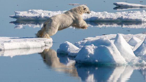Polar_bear_(Ursus_maritimus)_in_the_drift_ice_region_north_of_Svalbard