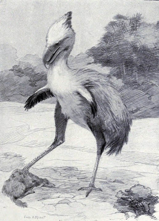 646px-Phorusrhacos