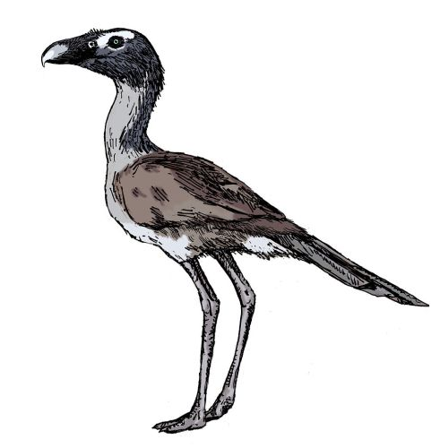 Psilopterus