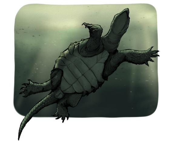 kilpikonnat_7_pieni