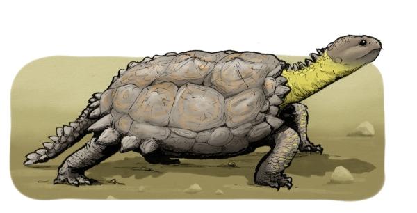 kilpikonnat_8_pieni