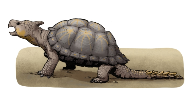 kilpikonnat_9_pieni
