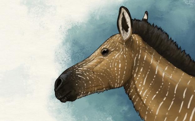 equus ovodovi väri pieni