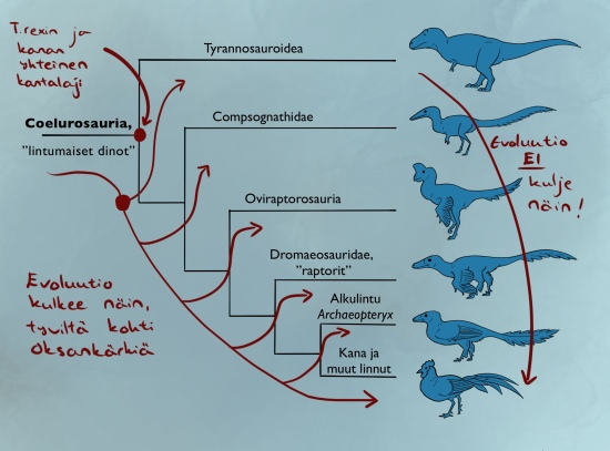 Coelurosauria_sukupuu (1)